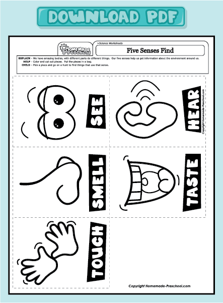 five sense worksheet new 780 five senses worksheets preschool. Black Bedroom Furniture Sets. Home Design Ideas