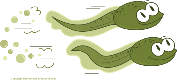 Back Gallery For Tadpoles Clipart